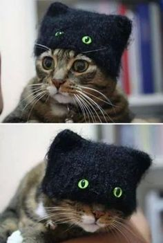 #Gatito #Gorro #LoveIt #Must