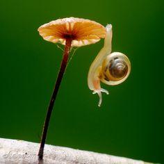 Tiny snail, tiny mushroom.