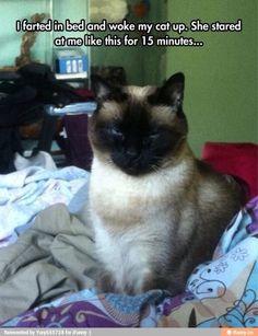 Love cats !!