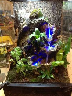 36 Best Terrarium Decor Images Reptile Terrarium Terrarium Ideas