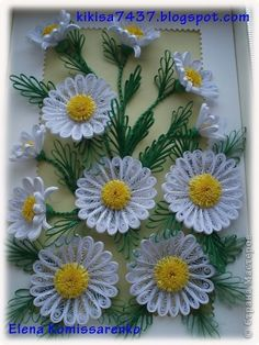 Master class on daisies