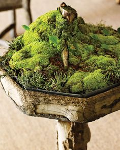 moss garden.   I like what they've done with it.  Each summer I buy another type of moss and I love them all.