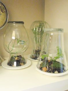 Here are some DIY terrariums at recyclart.org made from a flower vases and drinking glasses.