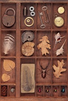 Natural History Collection ~ Daryl Benson