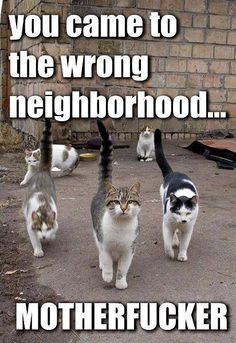 wrong neighborhood
