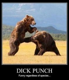 Check out all our Bear Takes A Cheap Shot funny pictures here on our site. We update our Bear Takes A Cheap Shot funny pictures daily! Funny Animals, Cute Animals, Wild Animals, Funny Bears, Demotivational Posters, Mundo Animal, Haha Funny, Funny Stuff, Funny Shit