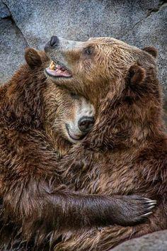 """Now that's what I call a bear hug.""   #bears"