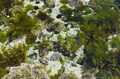 Seaweed, West Coast of Ireland