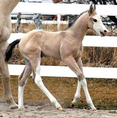 Minimally Marked Sabino Foal