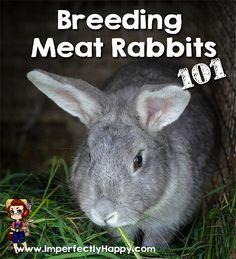 Breeding Meat Rabbits 101| ImperfectlyHappy.com