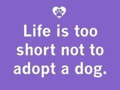 Amen! #dogs #adopt