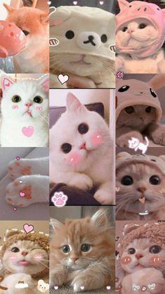 Wallpaper Gatos, Iphone Wallpaper Cat, Funny Cat Wallpaper, Cute Panda Wallpaper, Bear Wallpaper, Cute Disney Wallpaper, Cute Cartoon Wallpapers, Cute Kawaii Animals, Cute Wild Animals