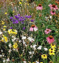 oklahoma wildflower landscape | Southeast Wildflower Seed Mix