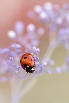 Ladybird by Mandy Disher