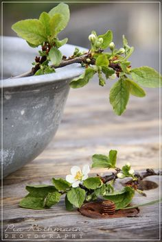 Cottage Charm ~ Nature Inspired ~ Apple blossom