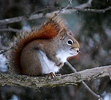 """"""" Hurry Up! It's really cold out here, eh! """" by Diane Blastorah"""