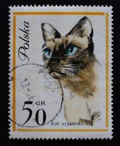 Siamese cat | postage stamp, Poland |  Janusz Grabianski