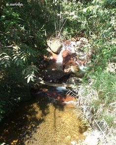 #parqueserradobrigadeiromg #serradobrigadeiro #minasgerais #brasil #natureza #nature #caminhosdeminas #parqueestadualmg #vida #life #meuolhar #mylook #fotografia #photograpy #meioambiente #samsung #minasgeraiis #sustentabilidade #trilha #trekking #sustainability #environment Re-post by Hold With Hope