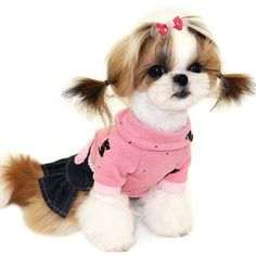 Pet Show Small Pet Dogs Cats Hair Bows With Clips Dog Hair Clips For Short Hair Pets Topknot Hair Accessories Assorted Colors Styles Pack Of 10pairs Pet Supplies Hair Accessories Dogs