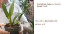 Aprenda como adubar orquídeas com todos os tipos de adubos, o adubo de manutenção, de enraizamento, o de crescimento, de floração e todos os tipos de adubos!