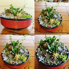 Succulents Garden, Cactus, Plants, Instagram, Vertical Gardens, Cactus Plants, Planters, Plant, Planting