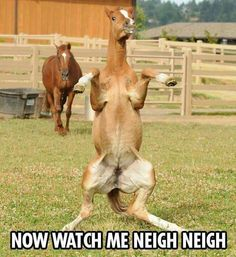 Now watch me Neigh neigh.