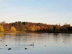 A view across the lake at Wollaton Park.