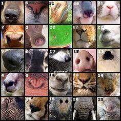 Five Senses - animal noses