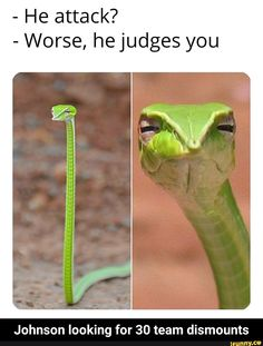 7 Funny memes of the day for Friday, 04 October 2019 - Laughing Community Good Morning Funny Pictures, Really Funny Pictures, Funny Pictures With Captions, Funny Images, Funny Photos, Beautiful Pictures, Funny Puns, Stupid Funny Memes, Funny Relatable Memes