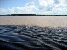 Excursão para o Encontro das Águas :: Amazon-Experience