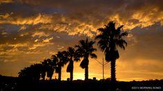California in Bondi Beach by Morning Bondi