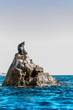 Photograph Yoga SeaLion Sunbathing Pacific Ocean - Los Cabos - Mexico - by Ali Satchu on 500px