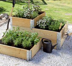 Syren, Semester, Plants, Ska, Plant, Planets