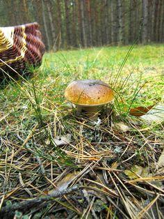 Pilze sammeln macht glücklich!
