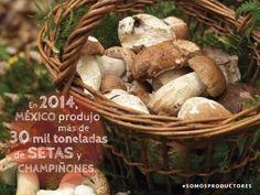 En 2014, México produjo más de 30 mil toneladas de setas y champiñones. SAGARPA SAGARPAMX #SOMOSPRODUCTORES