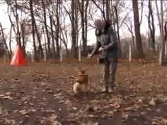 Kell-e falkavezér? - Korom Gábor Horses, Dog Stuff, Dogs, Plants, Animals, Youtube, Animales, Animaux, Pet Dogs