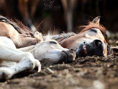 Pferde-Siesta