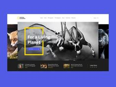 UI Movement - The best UI design inspiration, every day. Website Design Layout, Web Layout, Layout Design, Material Design, National Geographic, Conception D'applications, Creation Web, Best Ui Design, App Design