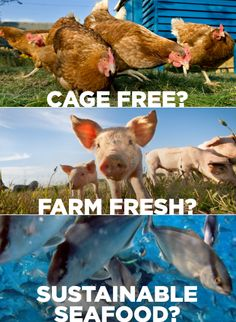 The truth behind food labeling: what does 'cage free' & 'farm fresh' REALLY mean?