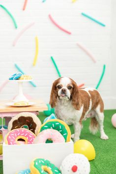 One Stylish Party shares ides and inspiration for hosting a colorful sprinkle donut birthday party for dogs! Balloon Backdrop, Balloons, Sprinkle Donut, Donut Birthday Parties, Donut Bar, Donuts, Sprinkles, Party Time, Dutch