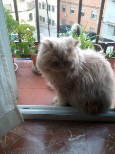 a mi gato le encanta salirse al balcón por las mañanas