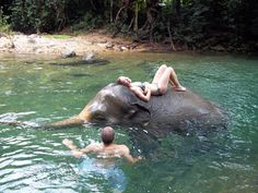 Spend your free time in Thailand playing with elephants. #CCS #volunteer