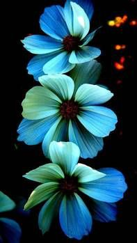 Checkout this Wallpaper for your iPhone: http://zedge.net/w10423466?src=ios&v=2.1.1 via @Zedge