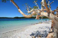 A perfect day for a trip to Lake McKenzie as Rie Kuwabara found out.  #fraserexplorer #fraserisland #queensland #australia www.fraserexplorertours.com.au