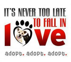 It's never too late to fall in love.  Adopt.  Adopt. Adopt. <3