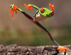 Kung fu frog by Shikhei Goh