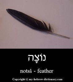 "How to say ""Feather"" in Hebrew"