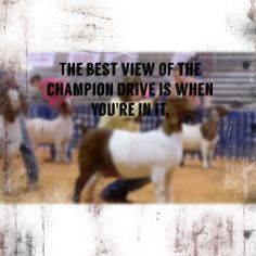 The best view of the Champion Drive Is when you're in it!