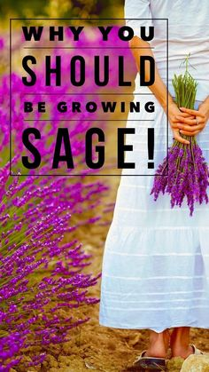 Learn how to grow sage in your garden, and the amazing health benefits of sage. Add this to your herb garden this year. Sage Health Benefits, Organic Gardening, Gardening Tips, Sage Plant, Herb Garden Design, Herbs Garden, Garden Ideas, Sage Garden, Home And Garden Store