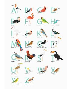 A3 Bird Alphabet print by watersounds on Etsy